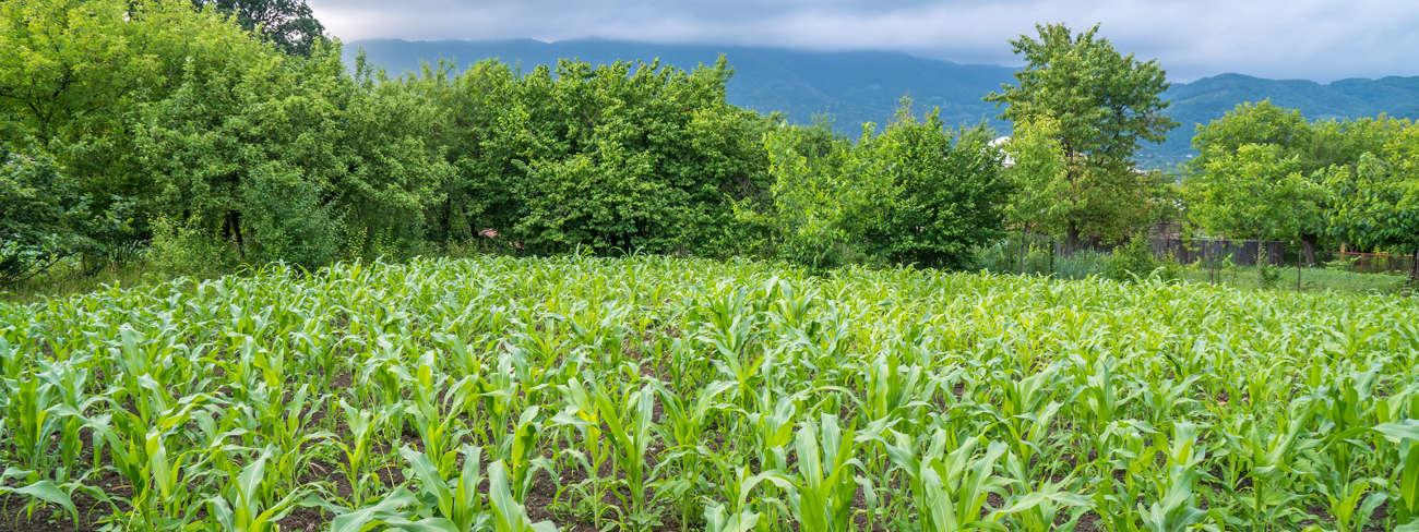 Nulandis farming crop health